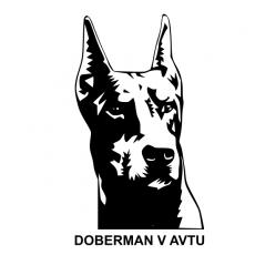 Doberman v avtu